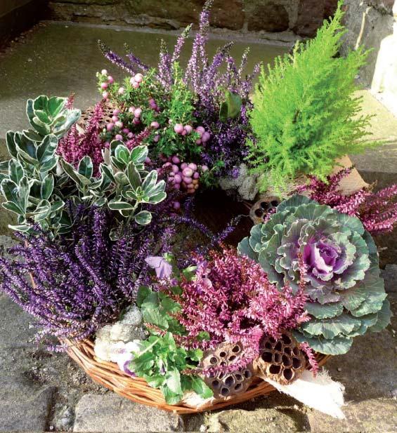 arrangement-calluna